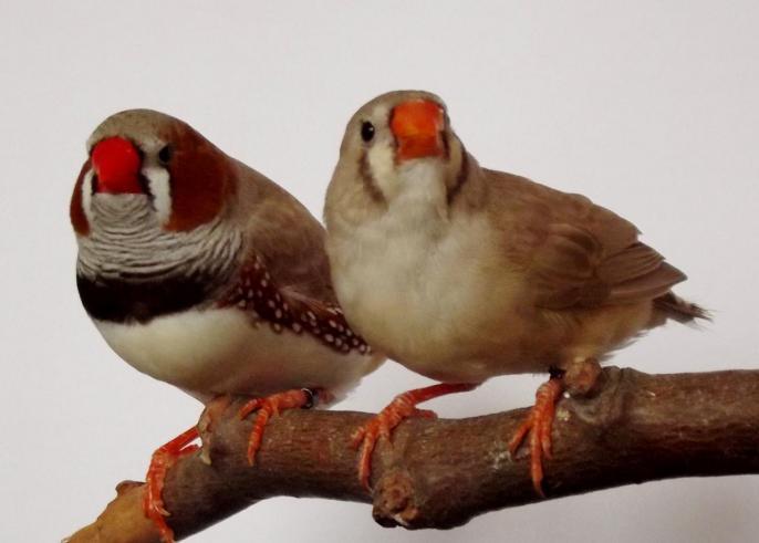 male B /M /PN 2013 ; femelle B /JN 2013