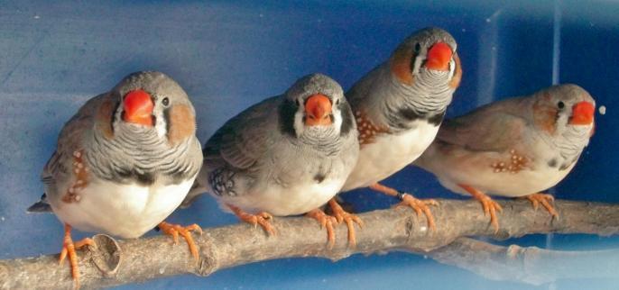 4 jeunes males à 1 mois et demi