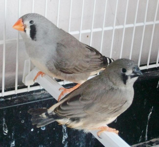 1er jeune (/JN) sorti du nid avec sa mère